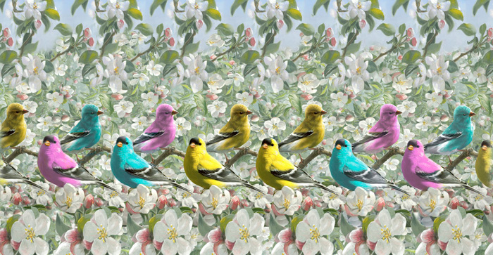 Colored Finches